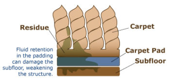 illustration of carpet fibers with oil and microbes at bottom