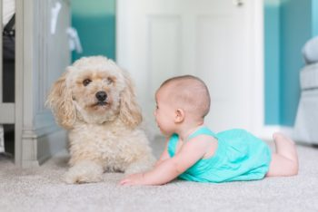 dog and infant on clean carpet