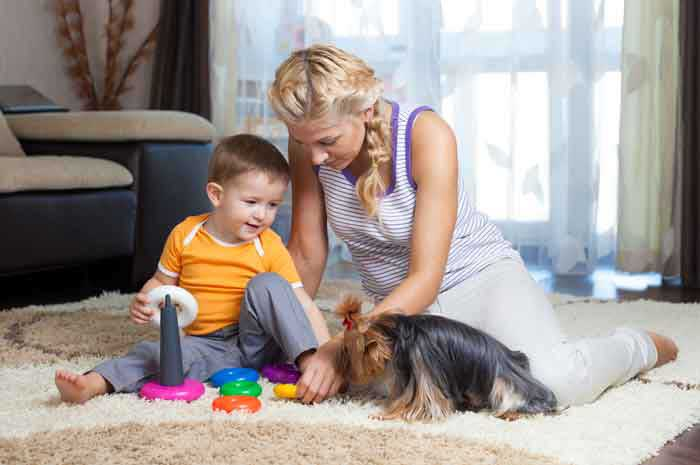 green living non toxic carpet cleaning