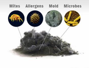 wet carpet mold allergens