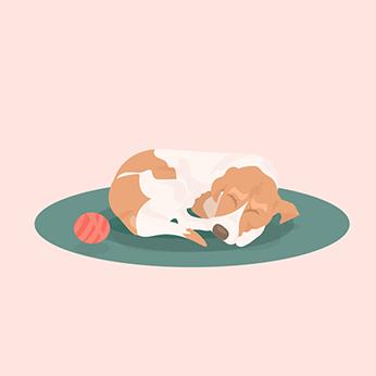 dog sleeping on clean rug